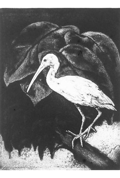 Eudocimus Ruber III