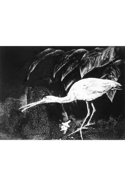 Eudocimus Ruber V