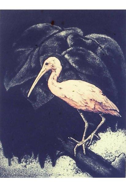 Eudocimus Ruber IV