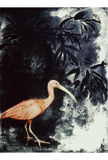 Eudocimus Ruber IX