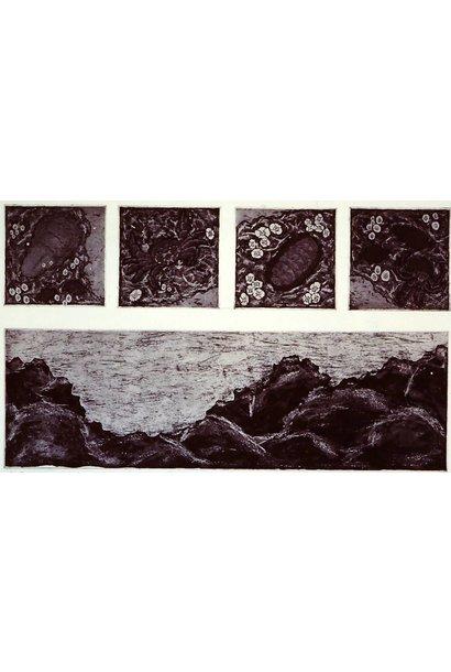 Intertidal Inventory