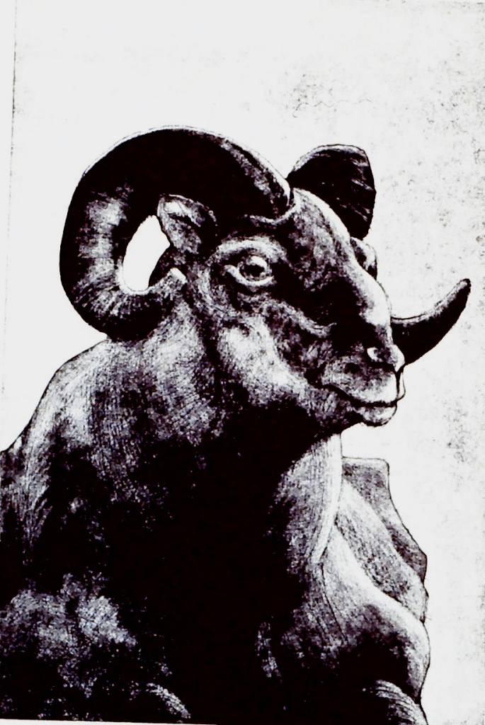 Mt Sheep Portrait-1
