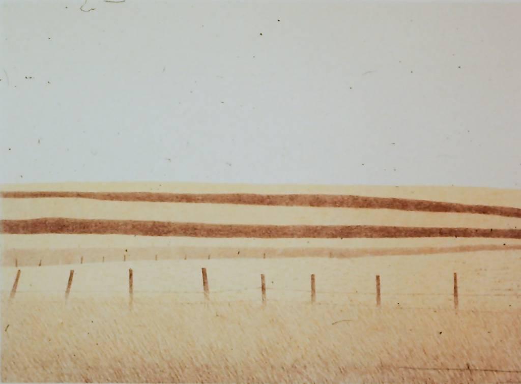 Alberta Fields-1