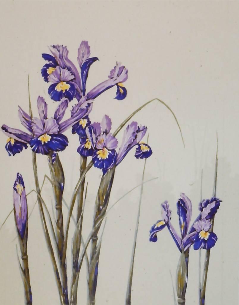 Dutch Iris-1