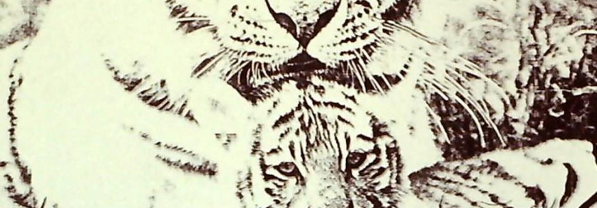 Black & White Tigers