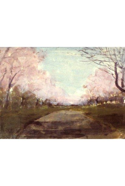 Cherry Blossom Ave #2