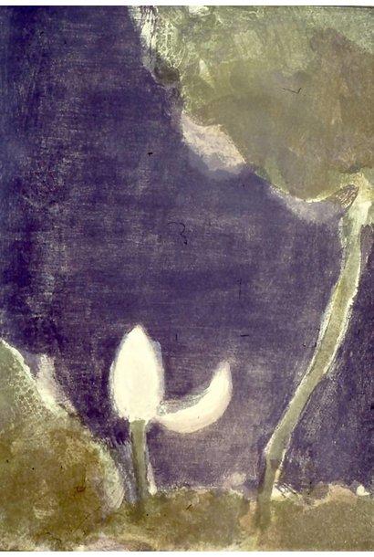 A Lotus Bud At Night