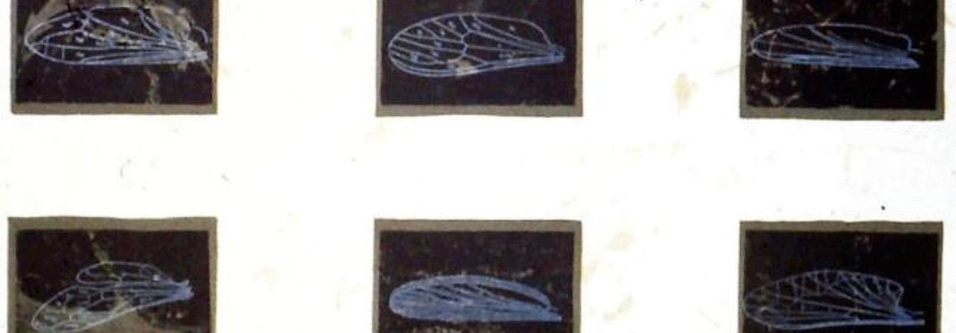 Diversity (Insect Wing Variations)