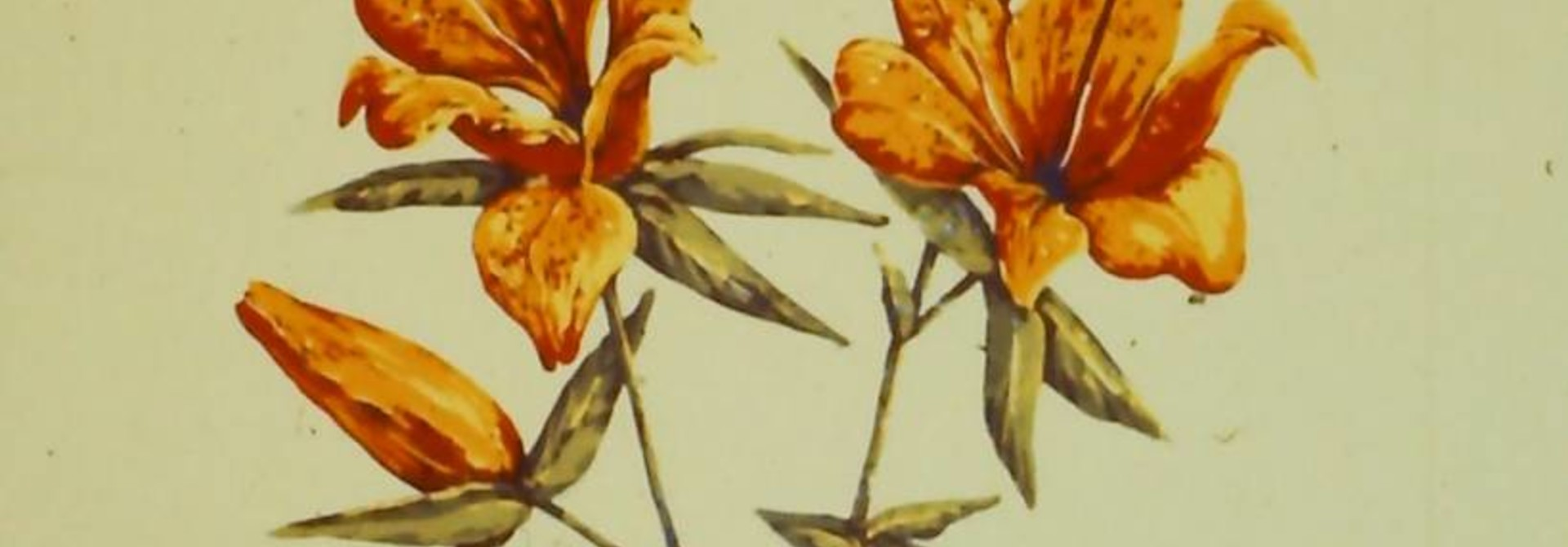 Enchantment Lily