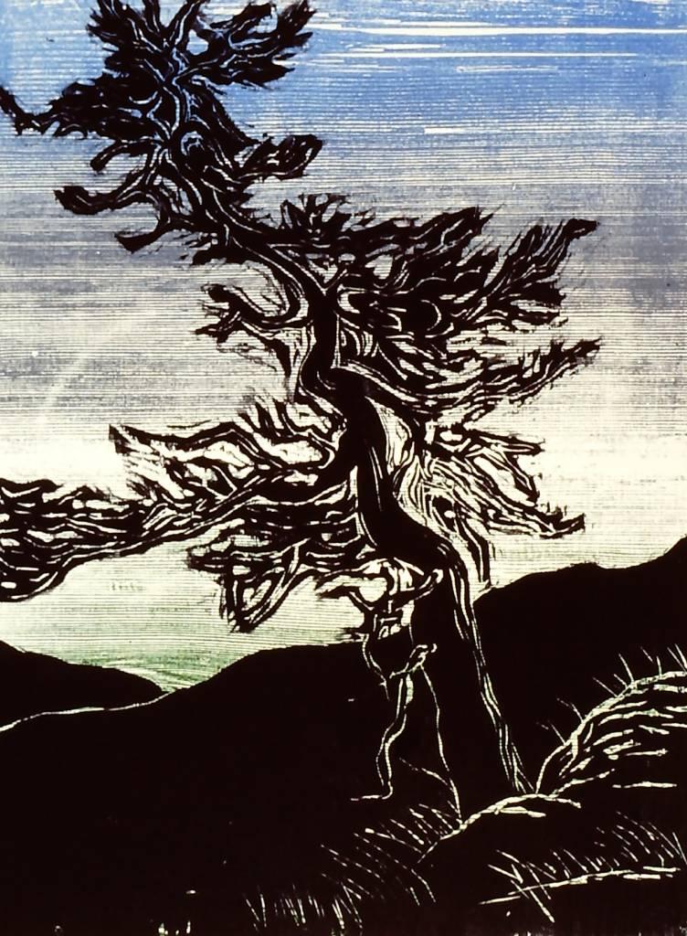 Ponderosa Pine-1