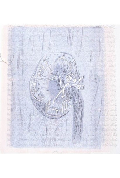Human Anatomy (Quecifel)
