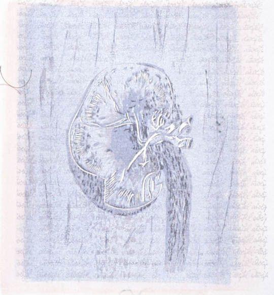 Human Anatomy (Quecifel)-1
