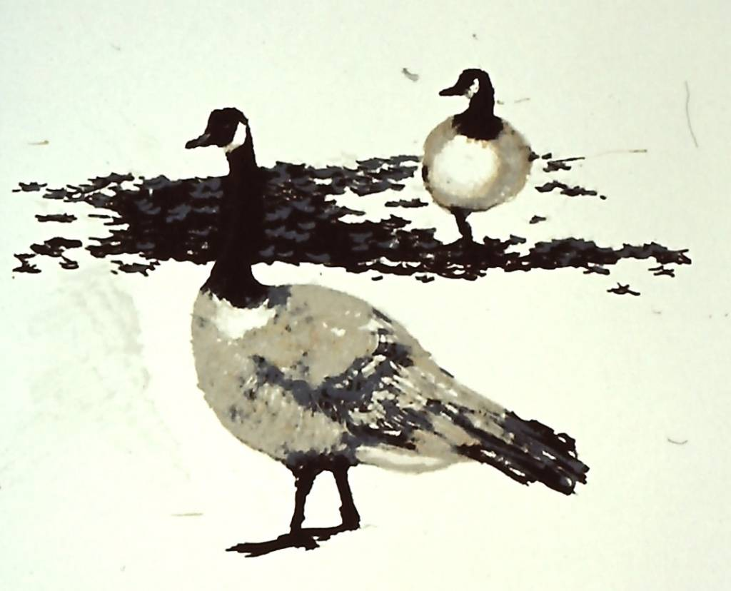 Canada Geese #2-1