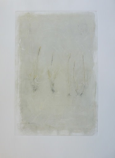 Festuca Saximontana B.C. Grasses Series-1