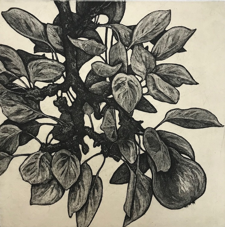 Garden Pear III-1