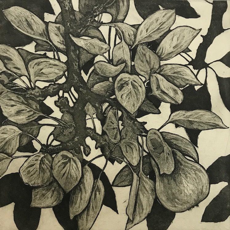 Pear no.4-1