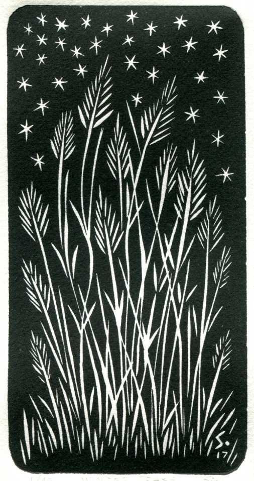 Winter Grass-1