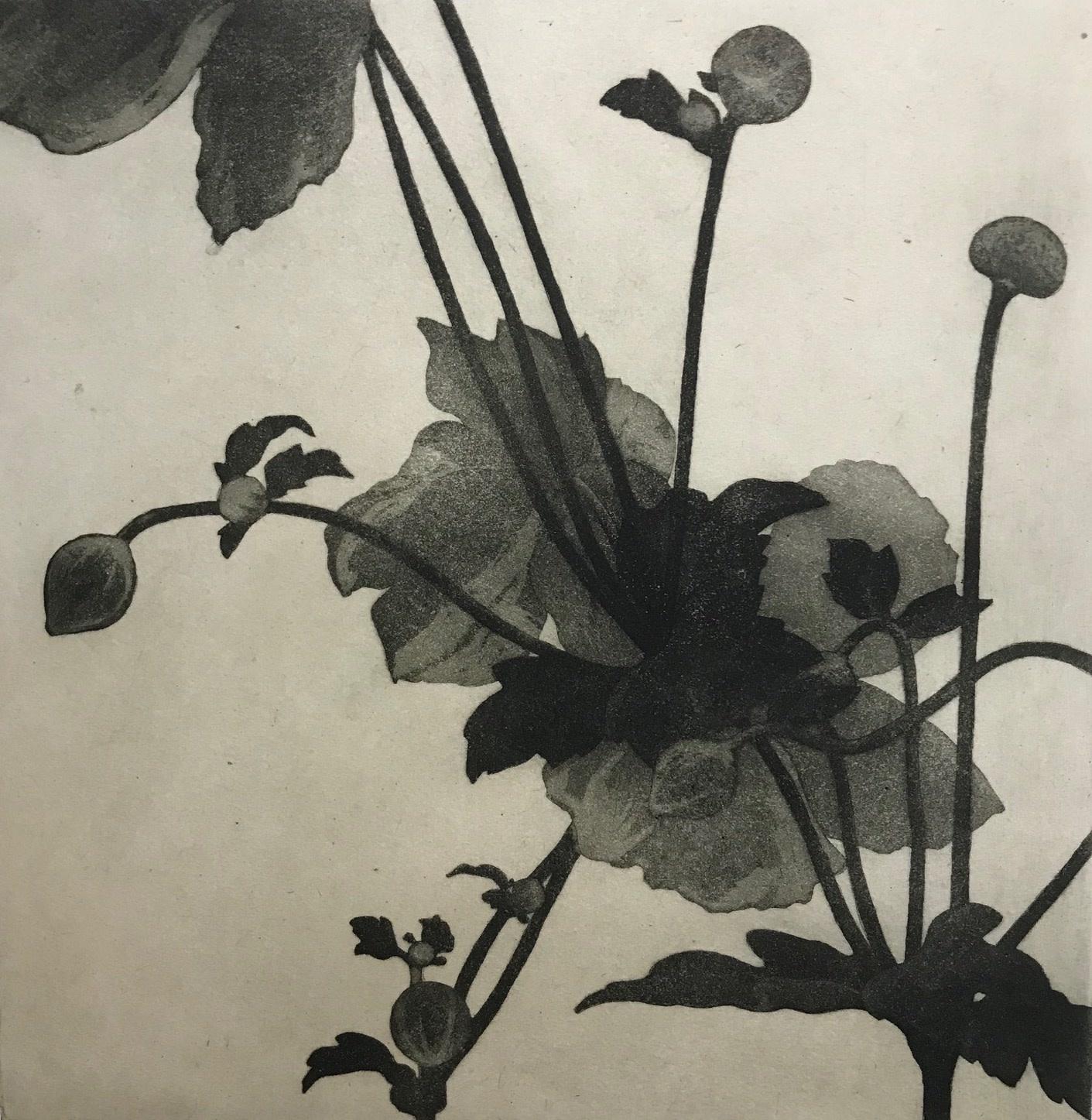 Japanese Anemone-1