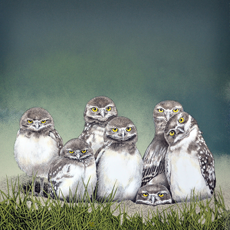 Drawing Owls on Stones-1