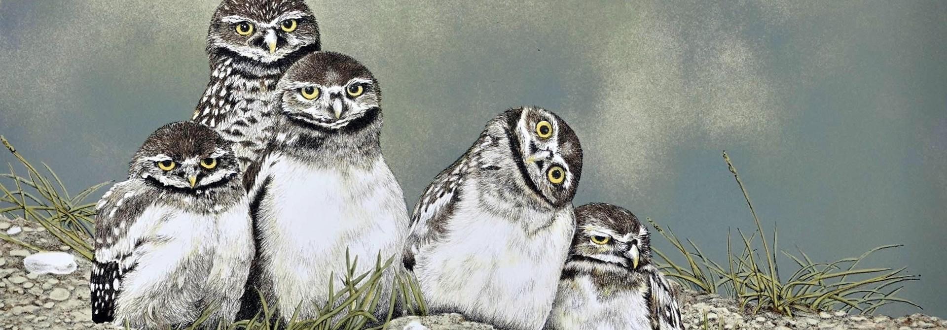 Burrowing Owls (framed)