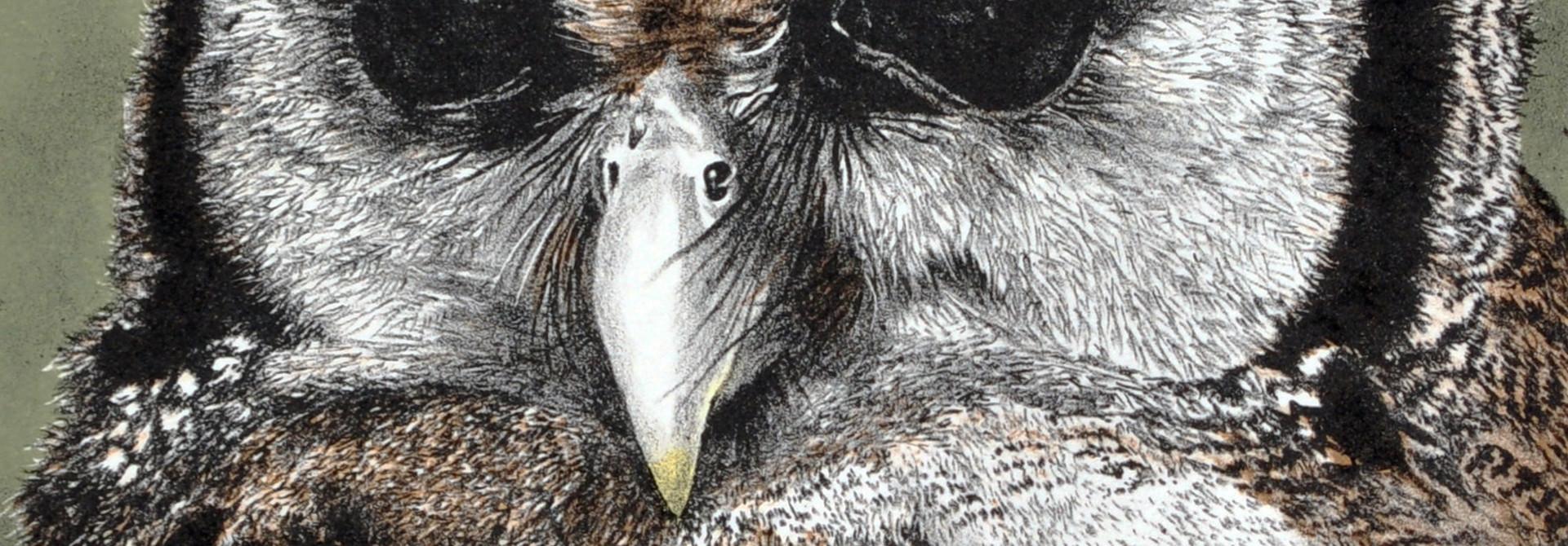 Eagle Owl (framed)