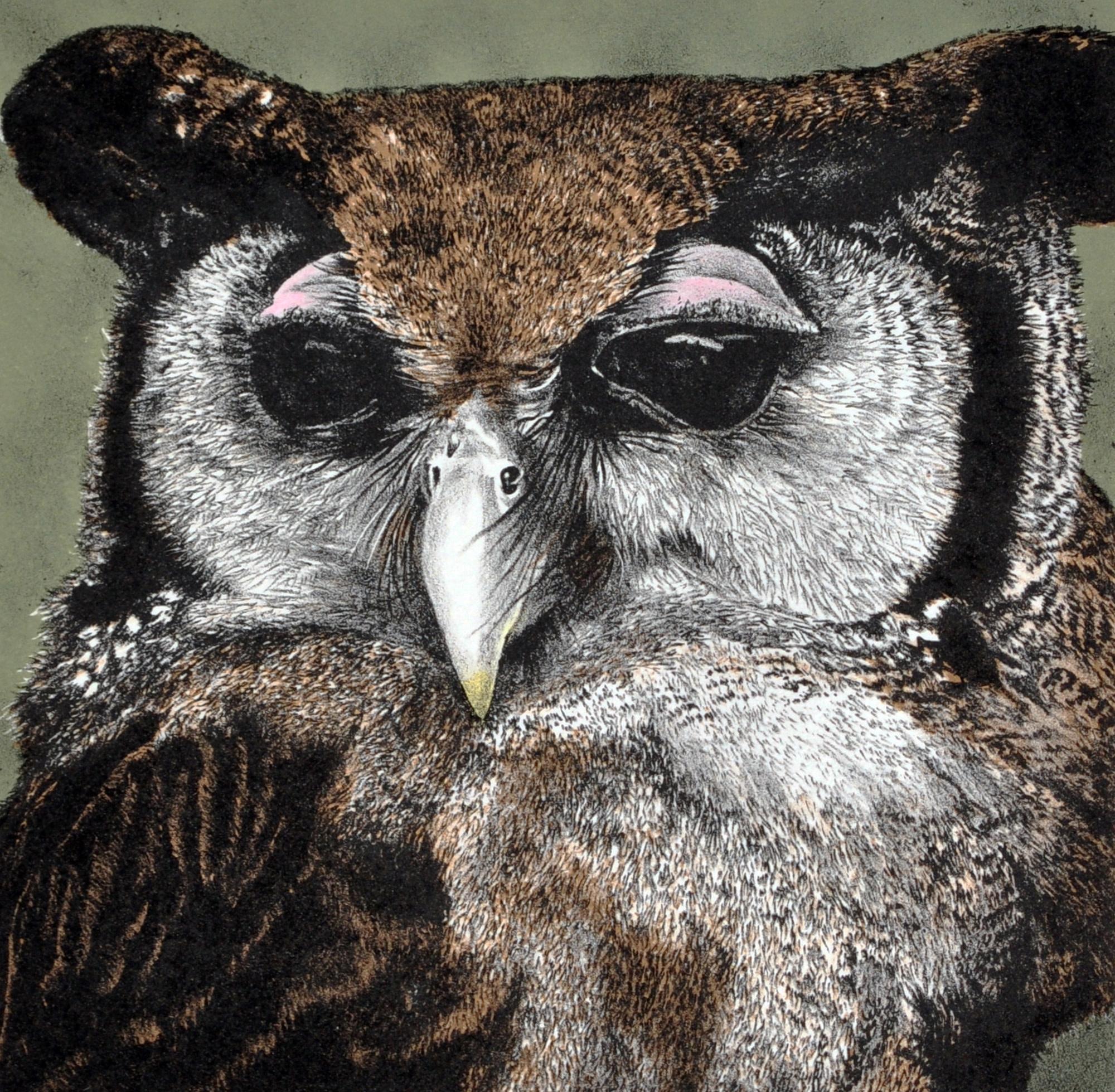 Eagle Owl (framed)-1