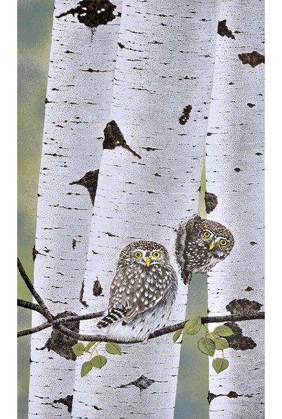Northern Pygmy Owls (framed)