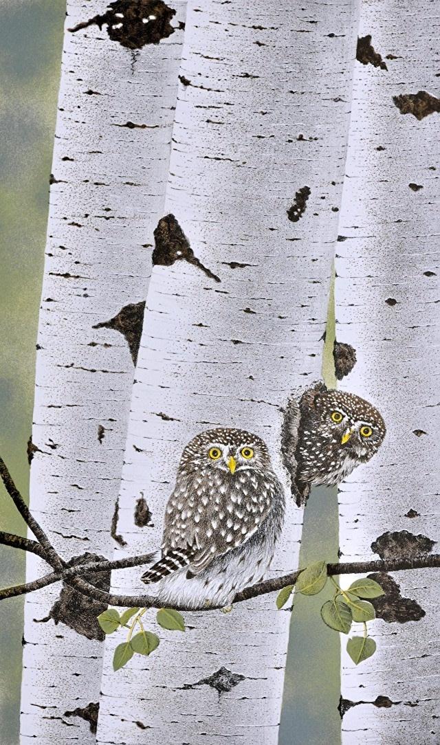 Northern Pygmy Owls (framed)-1