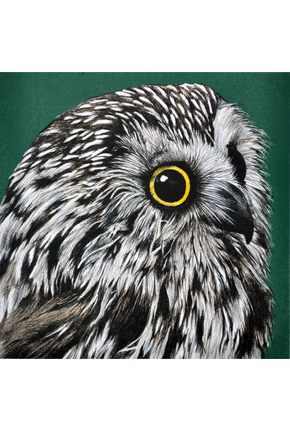 Saw Whet Owl (framed)