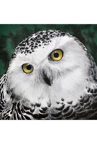 Snowy Owl (framed)