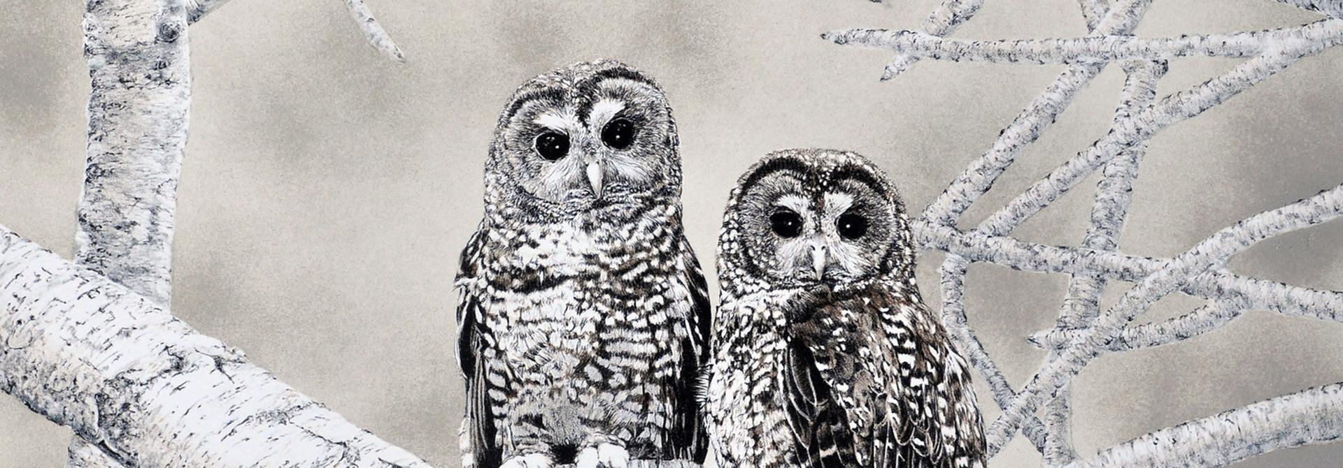 Spotted Owls (framed)