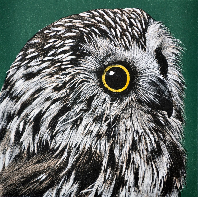 Saw Whet Owl-1