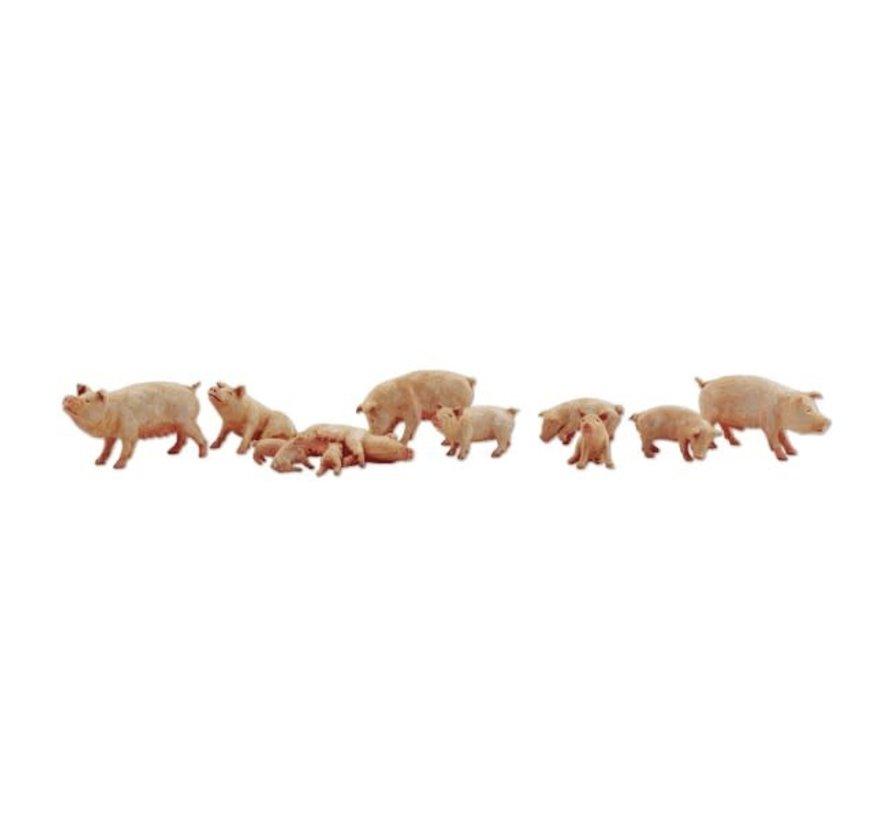 Woodland : N Yorkshire Pigs