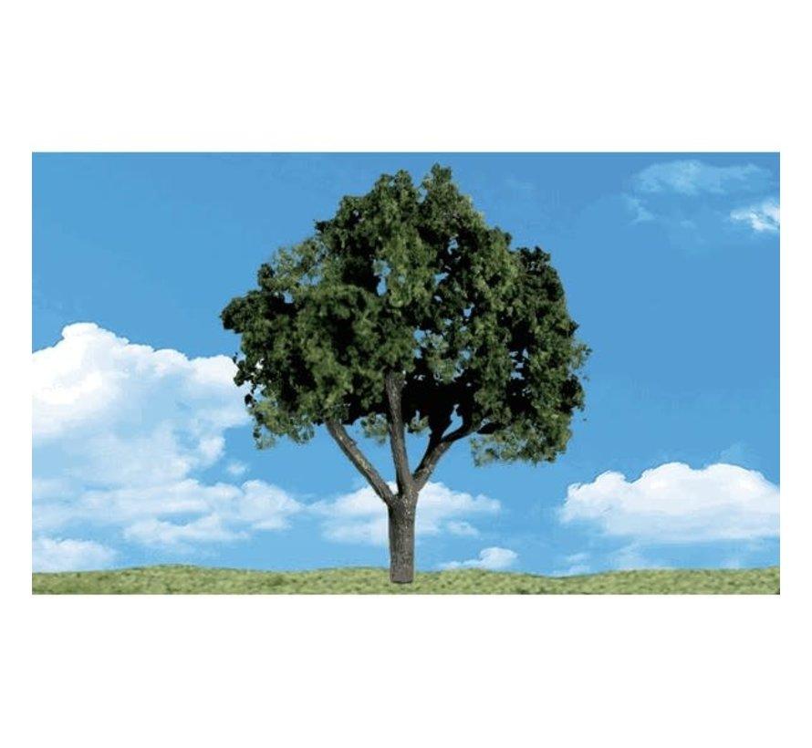 "Woodland : Cool Shade Trees 6"" - 7"""