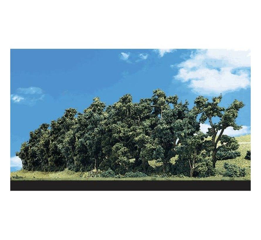 "Woodland : Hedge Row Trees 1"" - 2"""