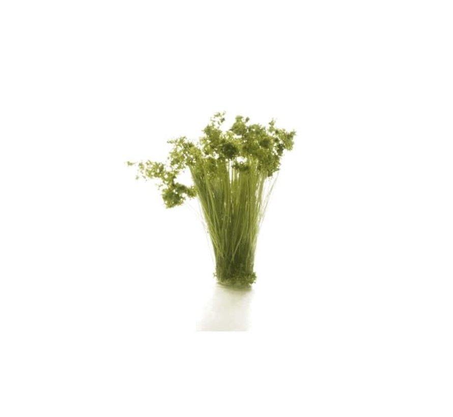 Woodland : Medium Green Prairie Grass
