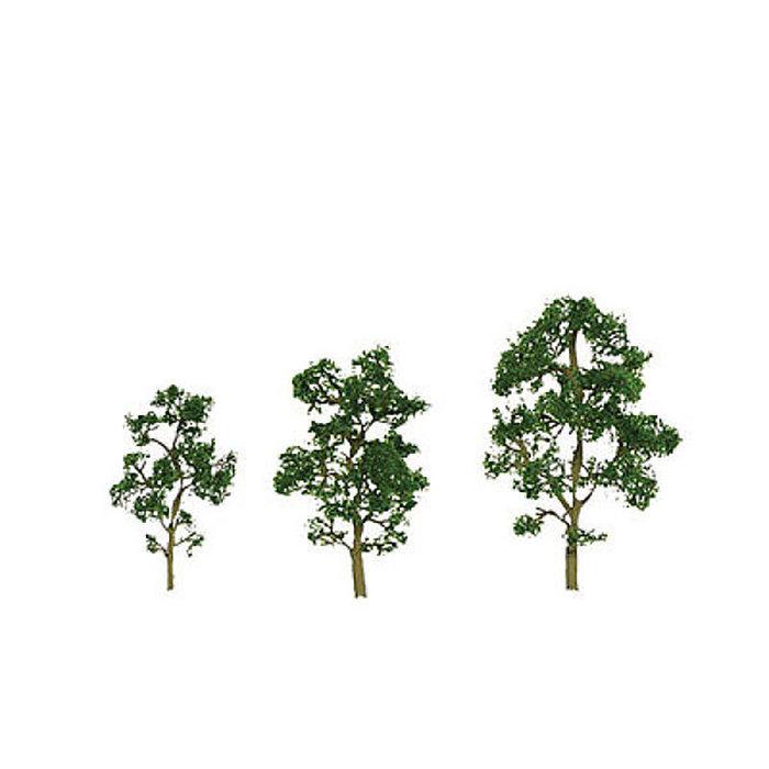 """O Maple Tree 8"""""""