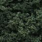 Clump Foliage Dark Green/3qt