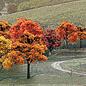 "Bulk Trees 3/4-2"" Fall Colors/38pc"""