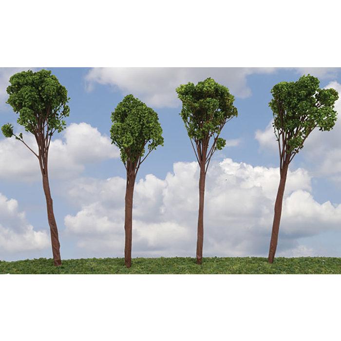 """Oak Tree Med 4-6"""" 6/"""