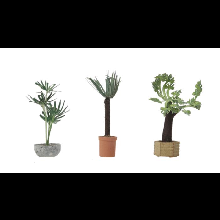 Tropical Plants 3/