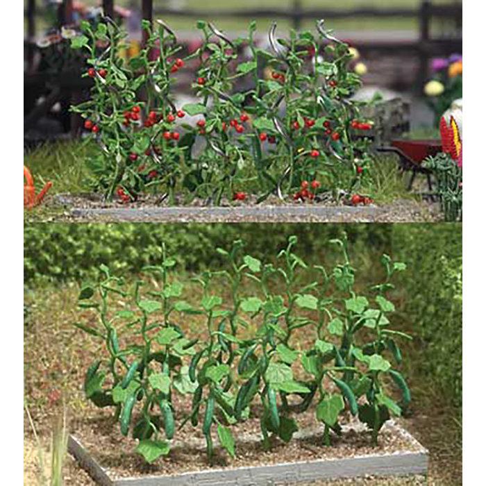 Cucmbr & Tomato Plants
