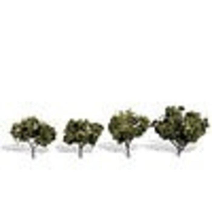 "Classics Tree, Sun Kissed 2-3"" (4)"
