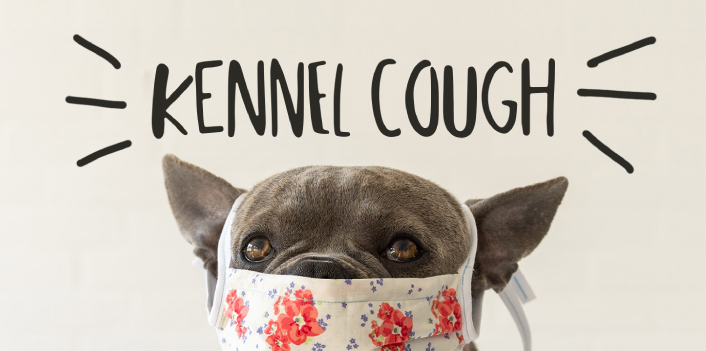 Kennel Cough: More Info, Less Fear.
