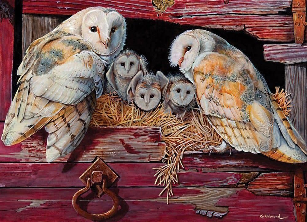 1000 - Barn Owls