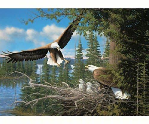 1000 - Nesting Eagles