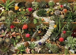 1000 - Succulent Garden