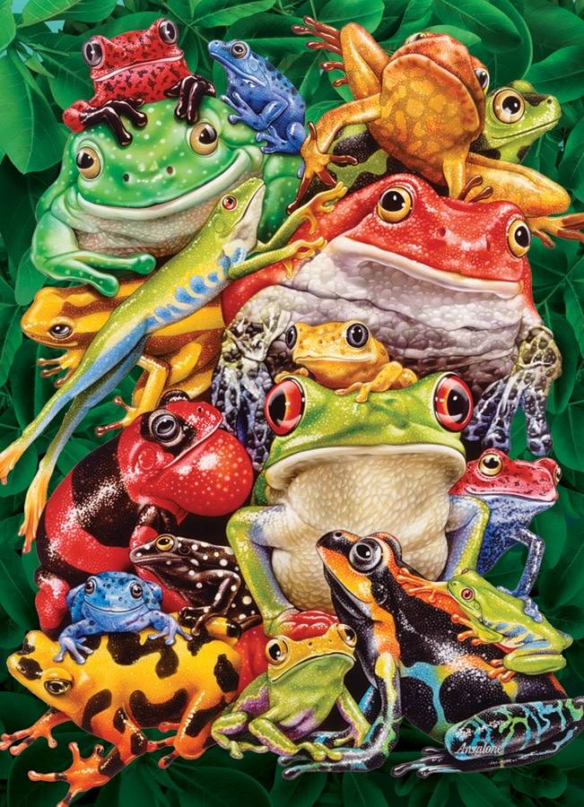 1000 - Frog Business