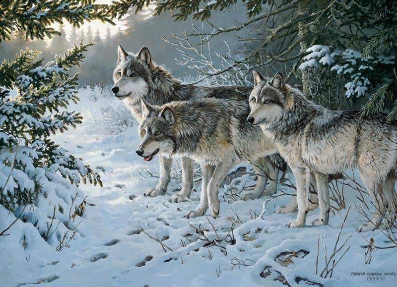 1000 - Wolf Trail