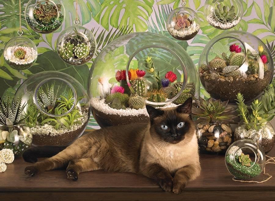 1000 - Terrarium Cat